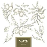 Sammlung von Olivenbaumelementen vektor