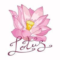 Vektorbild einer rosa Lotusblume mit ursprünglicher Beschriftung auf einem weißen Hintergrund. zartes Blumenlogo vektor