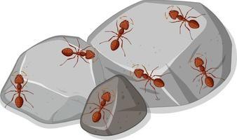 ovanifrån av många många röda myror på stenar vektor