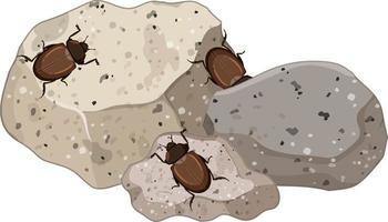 ovanifrån av insekter på stenblad isolerade vektor