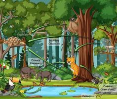 diagram som visar matväven i regnskogen vektor