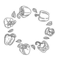 Paprika oder Paprika eingestellt. Vektorillustration in Form einer Skizze. vektor