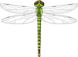 eine grüne Libelle auf weißem Hintergrund vektor