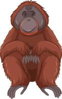 orangutang vilda djur på vit bakgrund vektor