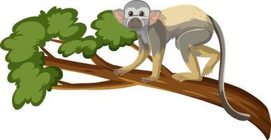 Eichhörnchenaffe Karikaturfigur auf einem Zweig lokalisiert auf weißem Hintergrund vektor