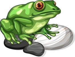 Nahaufnahme eines Frosches auf Steinblatt isoliert vektor