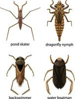 Satz von verschiedenen Arten von Käfern und Käfern mit Namen vektor