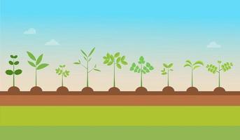 Pflanzentypen wachsen mit Naturhintergrund. Vektorillustration. Sämling grüne Bäume. Pflanzen auf Boden gesetzt. Gartenbaumsämling vektor