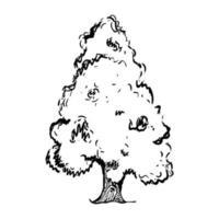 berg enbärsträd