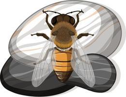 Draufsicht der Biene auf einem Stein auf weißem Hintergrund vektor
