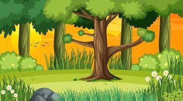 skog landskap scen vid solnedgången