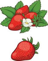 färsk röd jordgubbe frukt tecknad vektor isolerad illustration