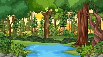 skog landskap scen vid solnedgången tid med många olika träd