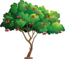Kirschbaum lokalisiert auf weißem Hintergrund vektor