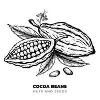 Kakaobohnen, Nüsse und Blätter handgezeichnete gravierte Stilskizzenillustration. vektor