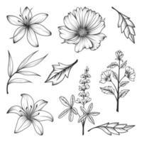samling av örter och vilda blommor och blad isolerad på vit bakgrund.