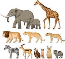 Satz von isolierten wilden afrikanischen Tieren auf weißem Hintergrund vektor