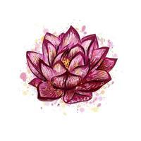 Lotusblume lokalisiert auf weißer, handgezeichneter Skizze. Vektorillustration vektor