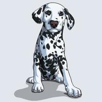 söta dalmatiska hund sitter isolerad på vit bakgrund vektor