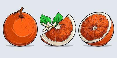 uppsättning akvarell söta apelsiner, hel och skivad orange frukt vektor