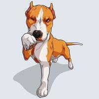niedlicher beiger Pitbull-Hund lokalisiert auf weißem Hintergrund vektor