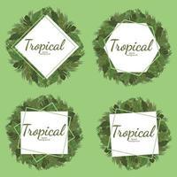 tropischer Blatthintergrund, grüner Illustrationsvektorentwurf vektor