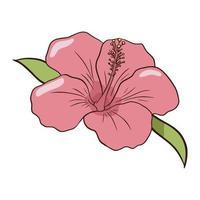Hand gezeichnete rosa Hibiskus-Ikone. flache Artlinienzeichnung bunte isolierte Illustration vektor