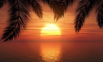 Palmer mot solnedgångshimmel