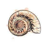 Nautilus-Muschelschnitt aus einem Spritzer Aquarell, handgezeichnete Skizze. Vektorillustration von Farben vektor