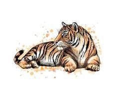 porträtt av en liggande tiger från ett stänk av akvarell, handritad skiss. vektor illustration av färger