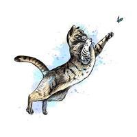 Katze spielt mit einem Schmetterling aus einem Spritzer Aquarell, handgezeichnete Skizze. Vektorillustration von Farben vektor