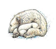Eisbär mit Jungtier aus einem Spritzer Aquarell, handgezeichnete Skizze. Vektorillustration von Farben vektor