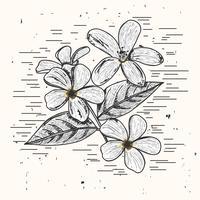 Jasmin-Vektor-Illustration vektor