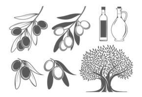 Olivenzweige, Baum und Öl vektor