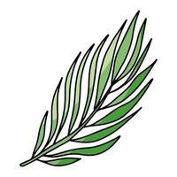 palmträdfilial isolerad på en vit bakgrund. vektor illustration