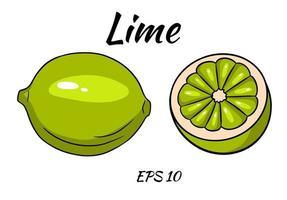 Satz saftige Limetten. Limette, ganz und halb geschnitten. vektor