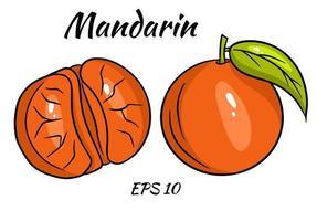 Satz helle Mandarinen. ganze Mandarinen- und Mandarinenkeile. vektor