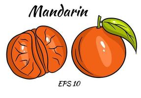 uppsättning ljusa mandariner. hela mandariner och mandarinkilar. vektor