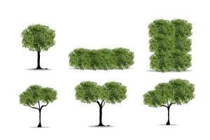 realistischer Baum auf weißem Hintergrund. eps10 Vektorillustration. vektor