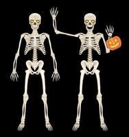 Skelett Ganzkörper auf schwarzem Hintergrund vektor