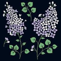 lila Blumen. isoliert auf einem schwarzen Hintergrund vektor
