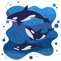 illustration av mördarevalar