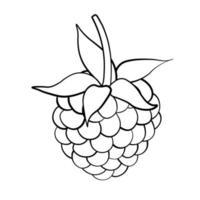 Himbeer-süße Fruchtillustration für Netz lokalisiert auf weißem Hintergrund vektor