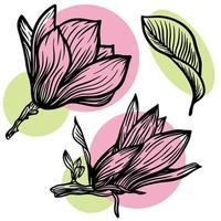 Satz Umriss Magnolienblume und Blattzeichnung mit Strichzeichnungen auf weißem Hintergrund mit rosa und grünen Flecken. Vektorillustration vektor