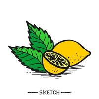 Zitrone und Blätter auf einem weißen Hintergrund vektor
