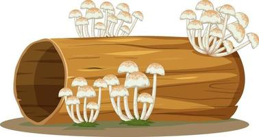 Pilz auf Baumstamm lokalisiert auf weißem Hintergrund vektor