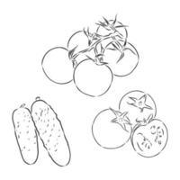 einfaches Gemüseset vektor