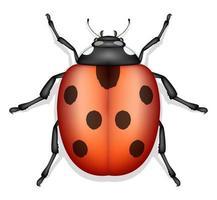 Marienkäfer Insektenvektor isoliert vektor