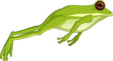 grüner Laubfrosch, der lokalisiert auf weißem Hintergrund springt vektor