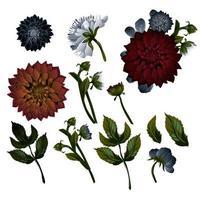 Vintage Blumenset. Dahlien. Satz Blumendekorationen. vektor